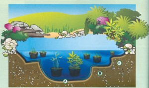 Die Wasserzonen