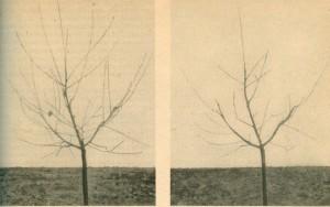 Links vor, rechts nach dem Schnitt
