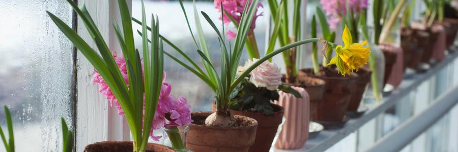 Balkon- und Kübelpflanzen blühen