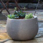 Bedacht – Gemüsebeet auf der Terrasse anlegen