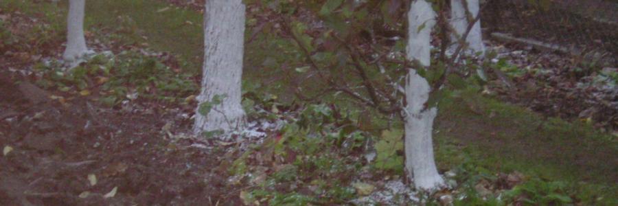 Grten Obstbaumanstrich