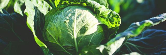 Pflanzen – Welche vertragen sich – Welche nicht?