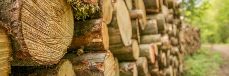 Benzin Kettensägen sind immer angebracht, wenn größere Bäume gefällt werden.