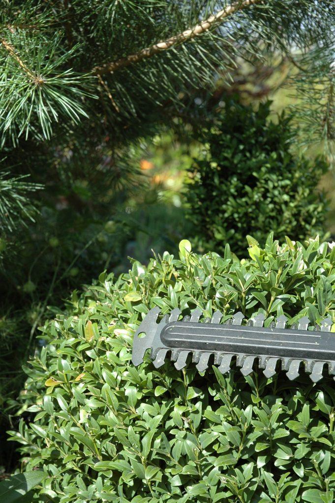 Heckenschere - Schwert