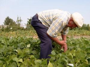 gardening-1-1476499